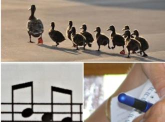 Leiderschap, muziek en taal
